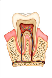 Root Canal Frederick